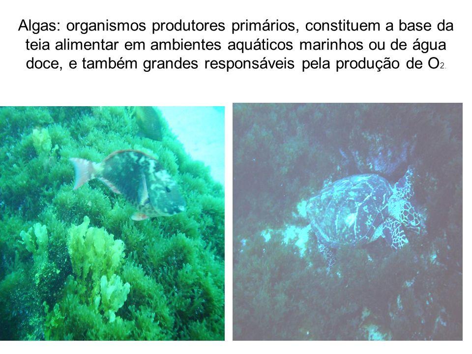 Algas: organismos produtores primários, constituem a base da teia alimentar em ambientes aquáticos marinhos ou de água doce, e também grandes responsáveis pela produção de O2.