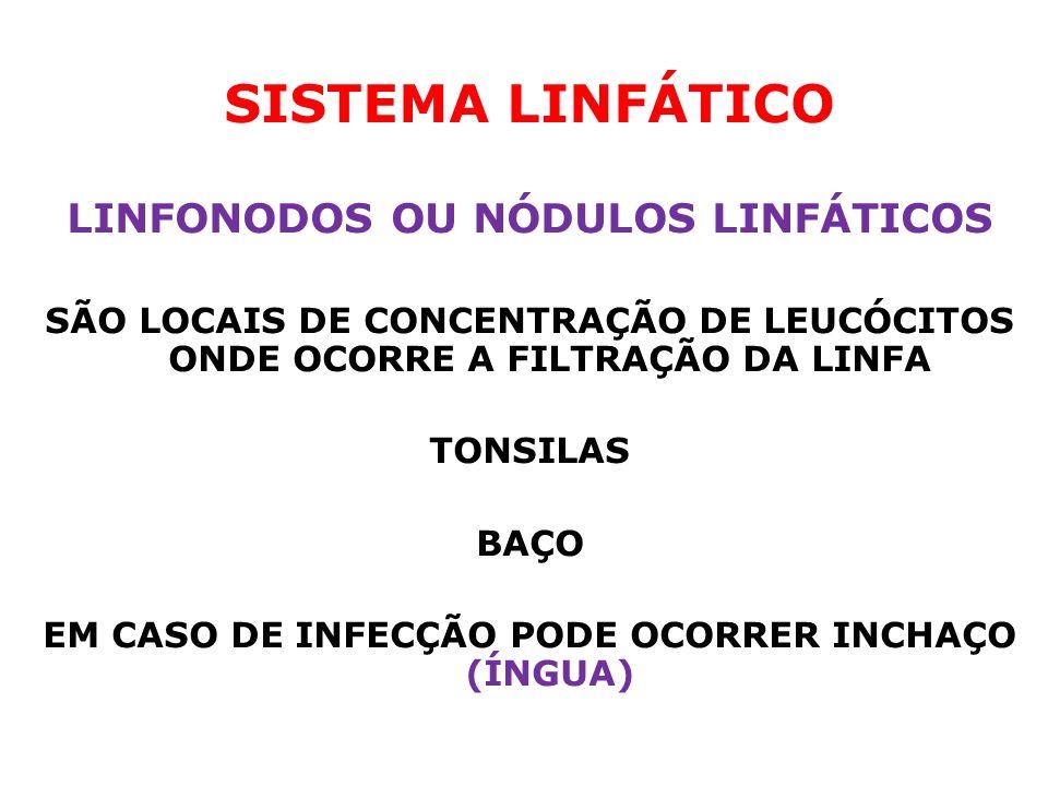 SISTEMA LINFÁTICO LINFONODOS OU NÓDULOS LINFÁTICOS