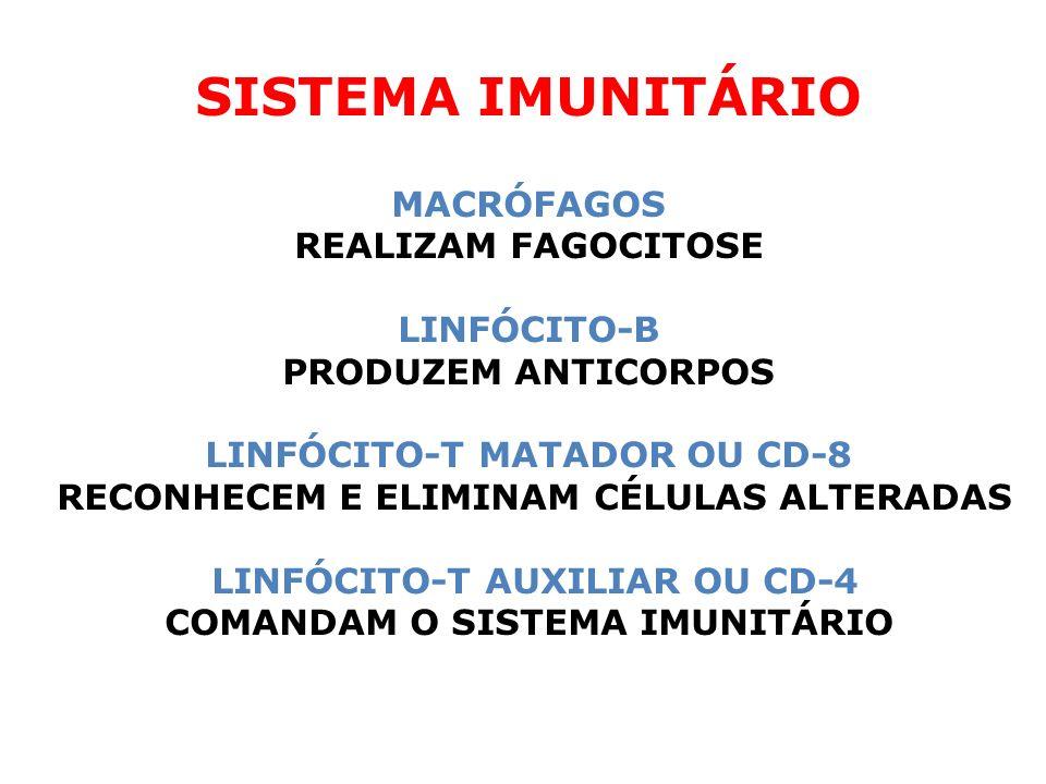 SISTEMA IMUNITÁRIO MACRÓFAGOS REALIZAM FAGOCITOSE LINFÓCITO-B