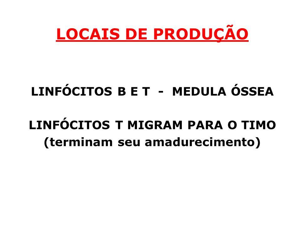LOCAIS DE PRODUÇÃO LINFÓCITOS B E T - MEDULA ÓSSEA