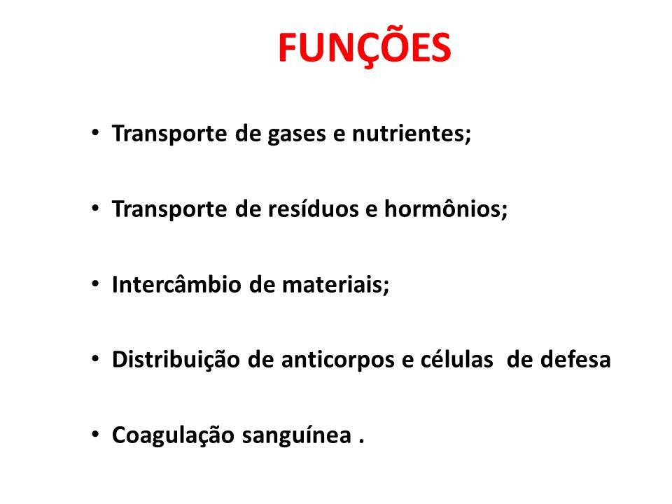 FUNÇÕES Transporte de gases e nutrientes;