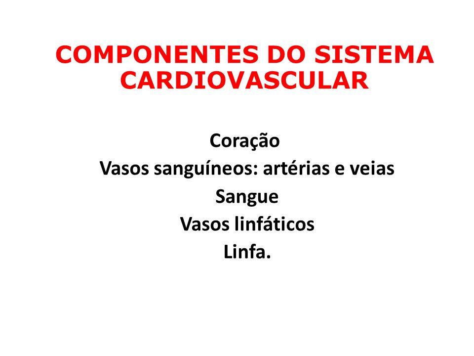 Vasos sanguíneos: artérias e veias Sangue Vasos linfáticos Linfa.