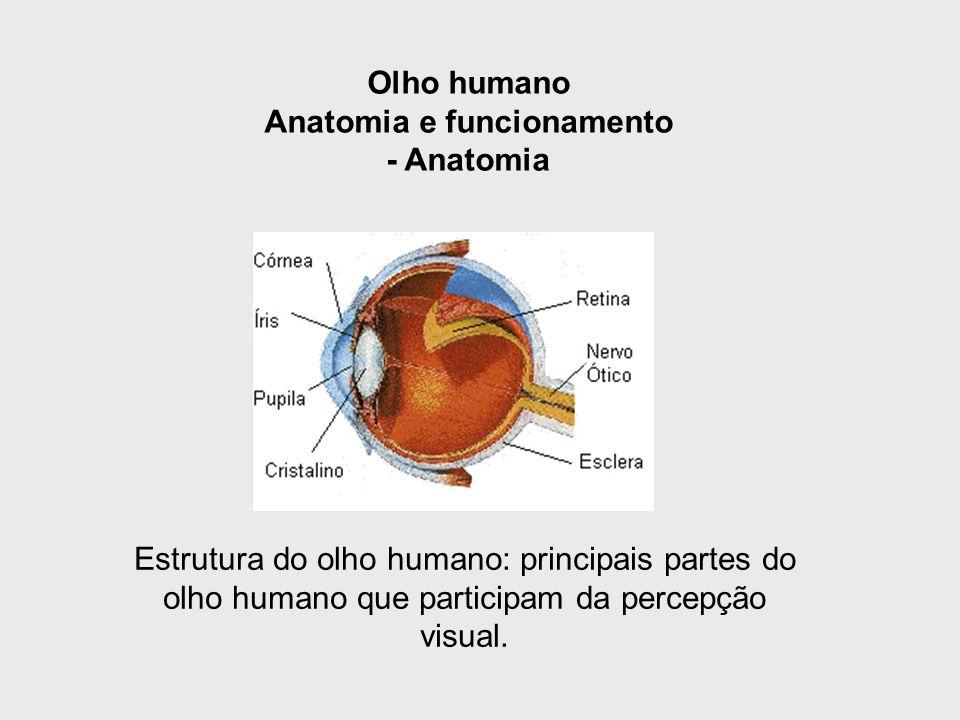 Anatomia e funcionamento