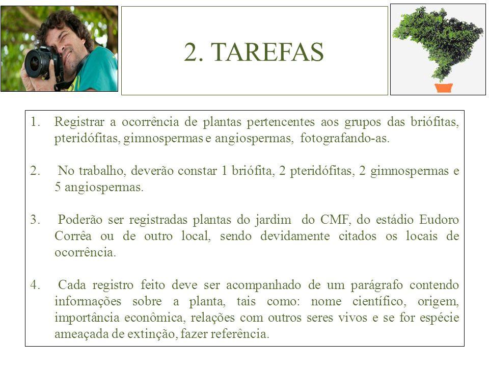 2. TAREFAS Registrar a ocorrência de plantas pertencentes aos grupos das briófitas, pteridófitas, gimnospermas e angiospermas, fotografando-as.