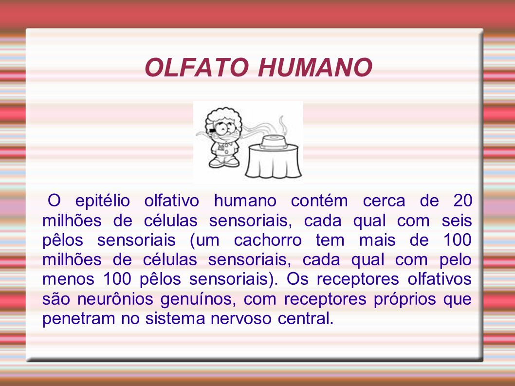 OLFATO HUMANO