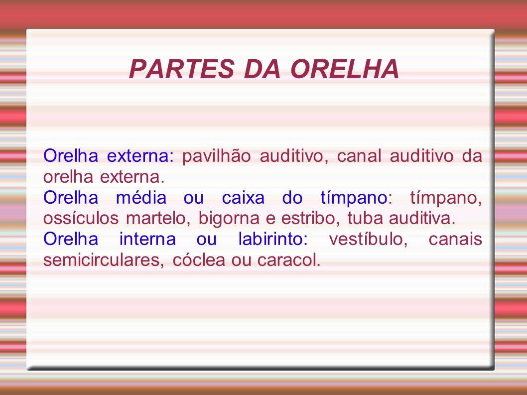 PARTES DA ORELHAOrelha externa: pavilhão auditivo, canal auditivo da orelha externa.