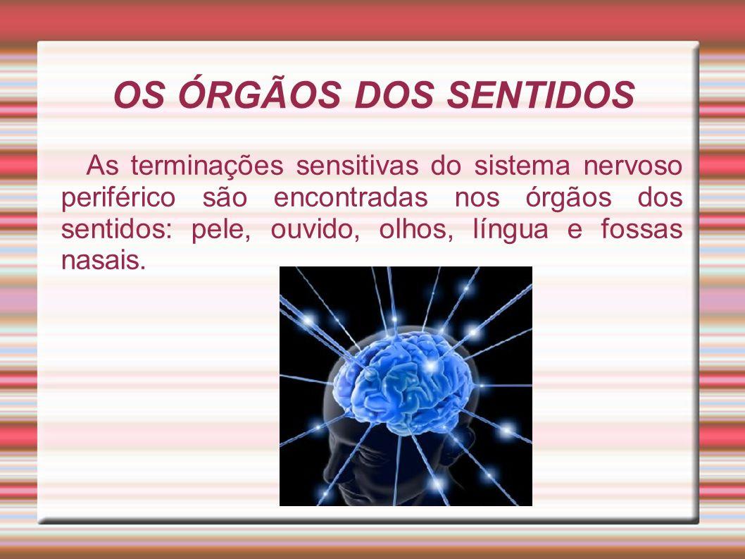 OS ÓRGÃOS DOS SENTIDOS