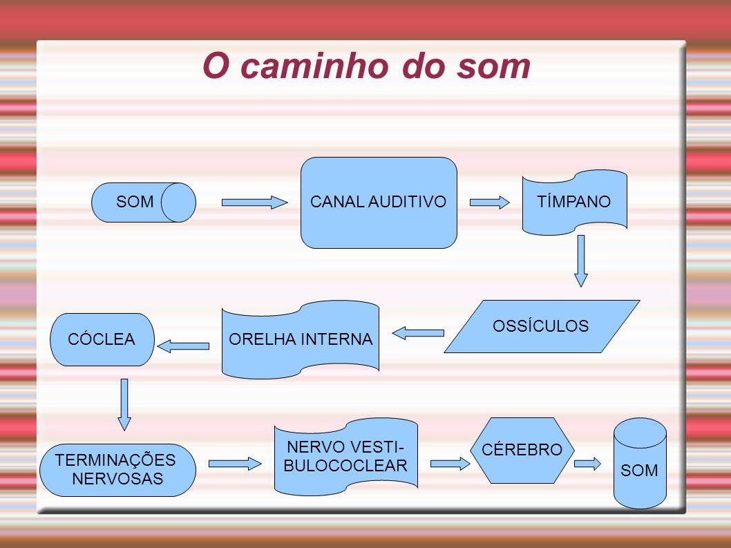 O caminho do som CANAL AUDITIVO TÍMPANO SOM OSSÍCULOS ORELHA INTERNA