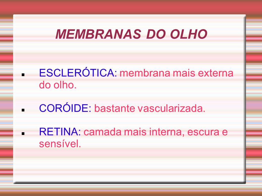 MEMBRANAS DO OLHO ESCLERÓTICA: membrana mais externa do olho.