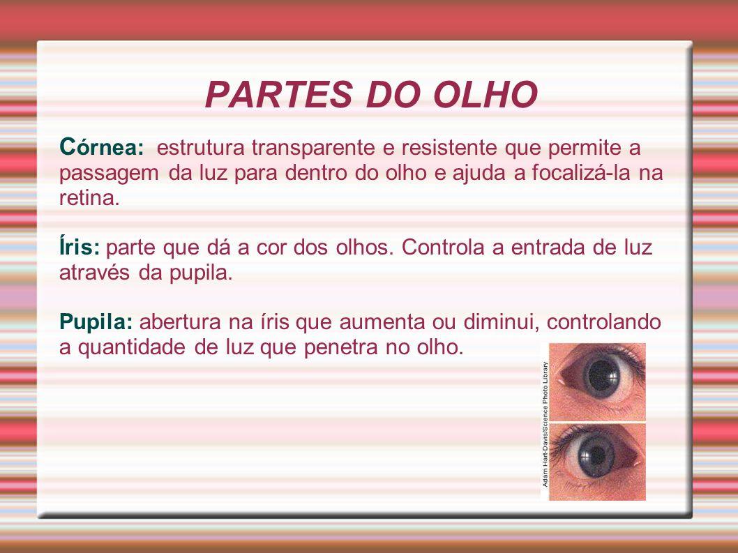 PARTES DO OLHO Córnea: estrutura transparente e resistente que permite a passagem da luz para dentro do olho e ajuda a focalizá-la na retina.