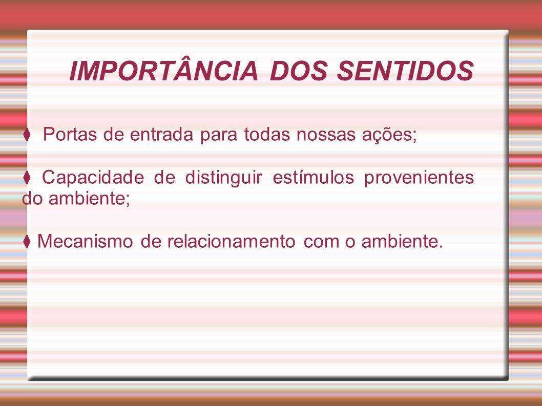 IMPORTÂNCIA DOS SENTIDOS
