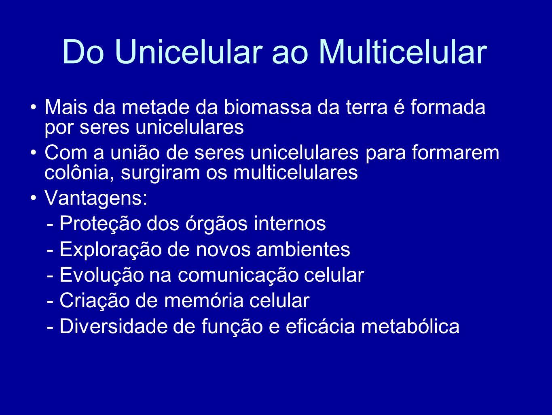 Do Unicelular ao Multicelular