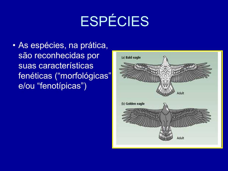 ESPÉCIES As espécies, na prática, são reconhecidas por suas características fenéticas ( morfológicas e/ou fenotípicas )
