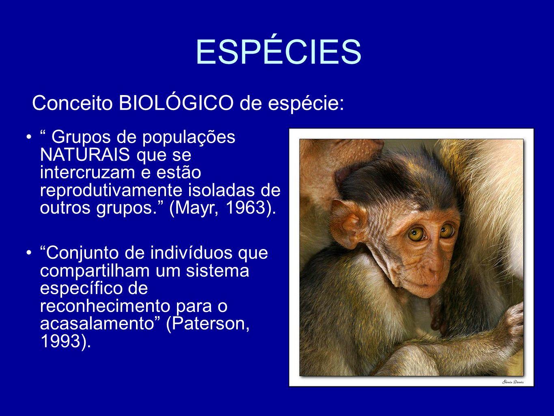 ESPÉCIES Conceito BIOLÓGICO de espécie: