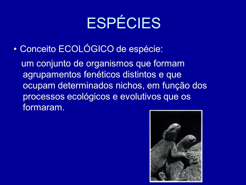 ESPÉCIES Conceito ECOLÓGICO de espécie: