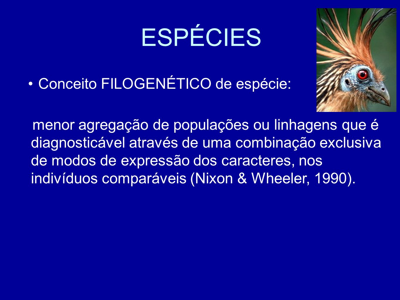 ESPÉCIES Conceito FILOGENÉTICO de espécie: