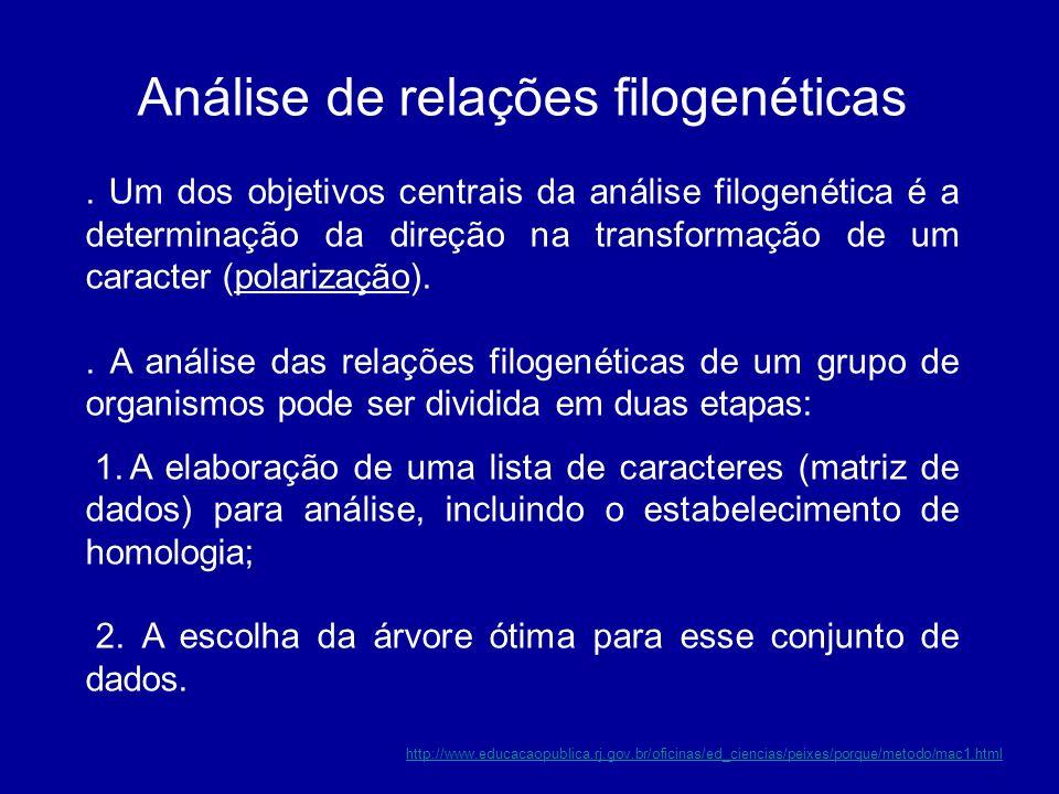 Análise de relações filogenéticas