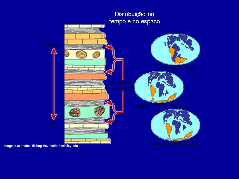 Distribuição no tempo e no espaço