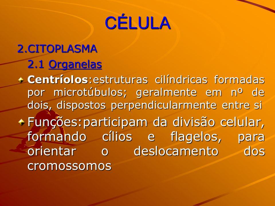 CÉLULA 2.CITOPLASMA. 2.1 Organelas.