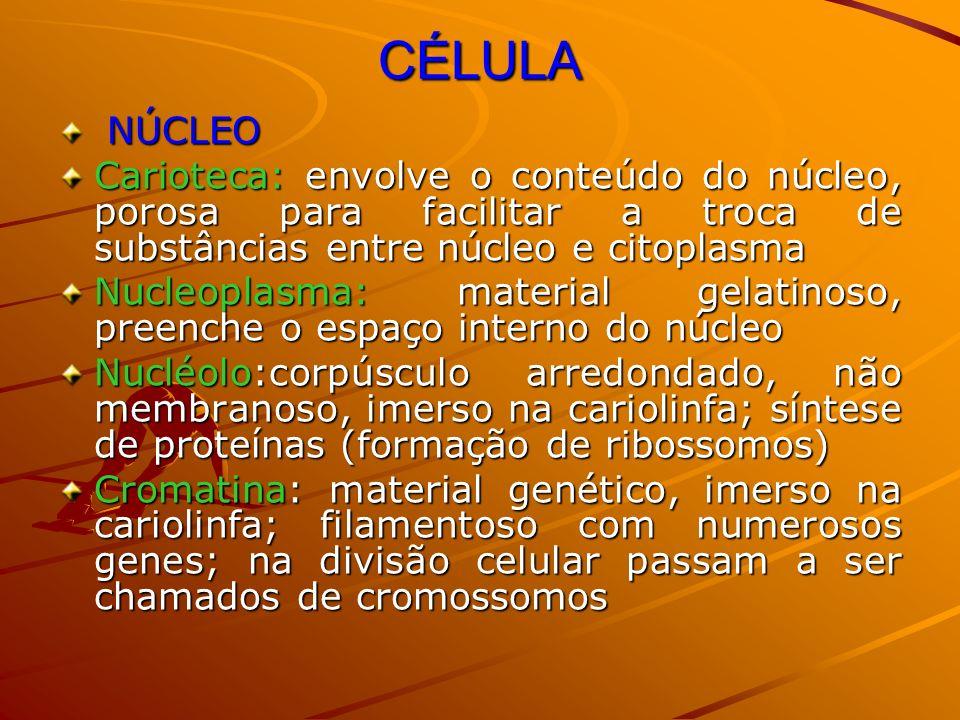 CÉLULA NÚCLEO. Carioteca: envolve o conteúdo do núcleo, porosa para facilitar a troca de substâncias entre núcleo e citoplasma.
