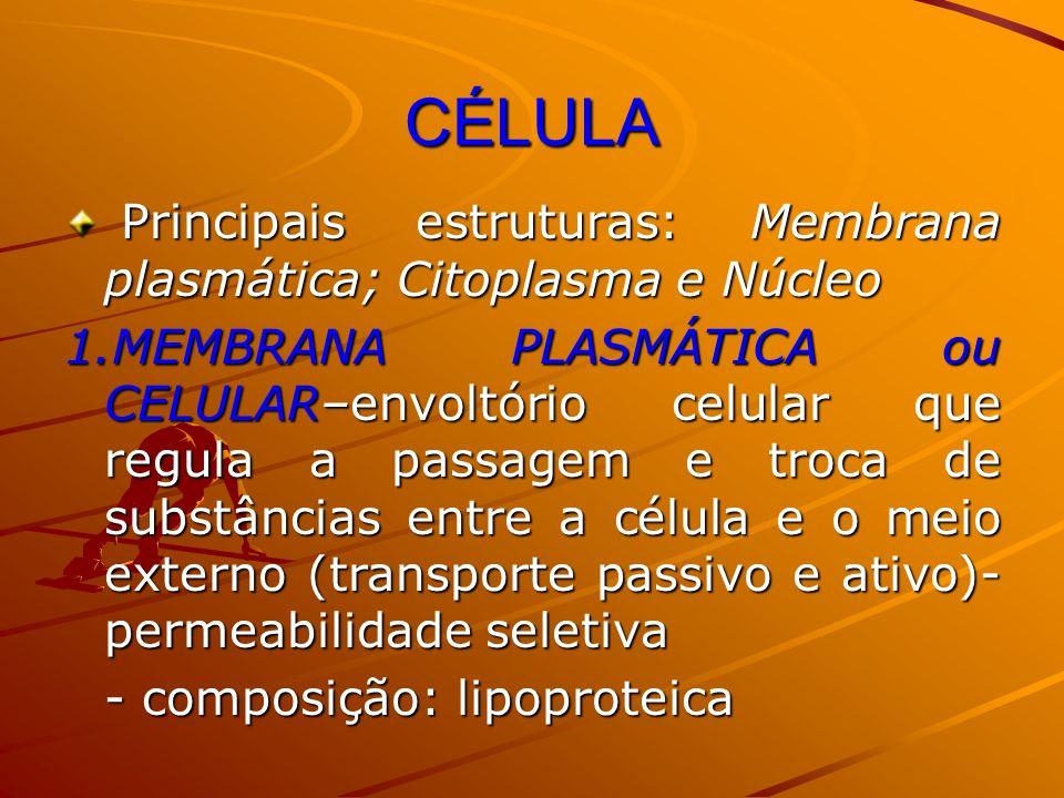 CÉLULA Principais estruturas: Membrana plasmática; Citoplasma e Núcleo
