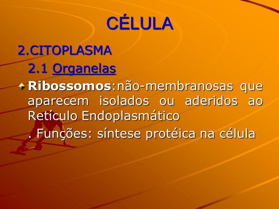 CÉLULA 2.CITOPLASMA 2.1 Organelas