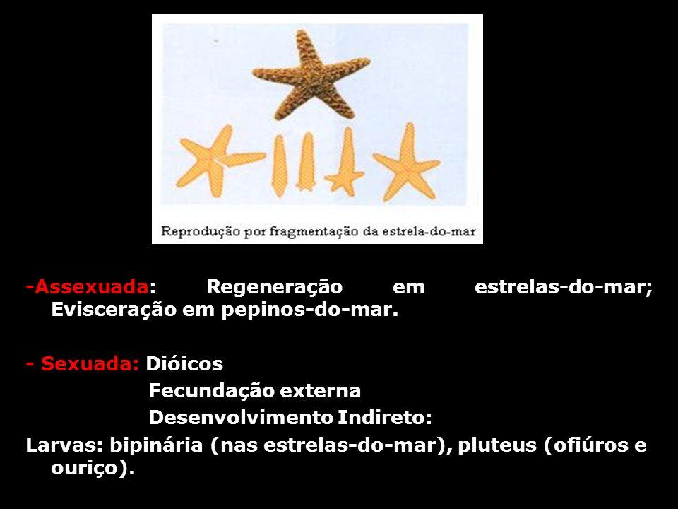 -Assexuada: Regeneração em estrelas-do-mar; Evisceração em pepinos-do-mar.