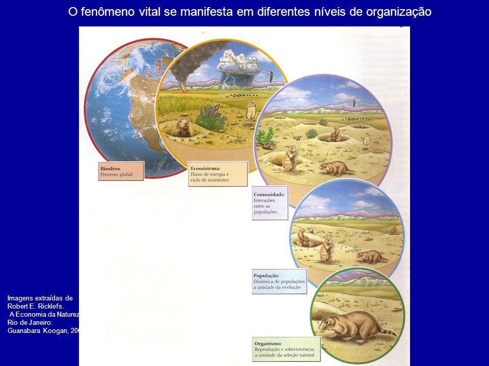 O fenômeno vital se manifesta em diferentes níveis de organização