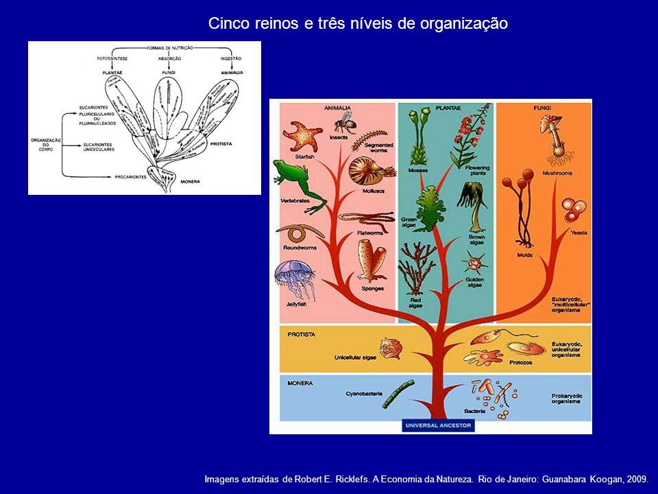 Cinco reinos e três níveis de organização