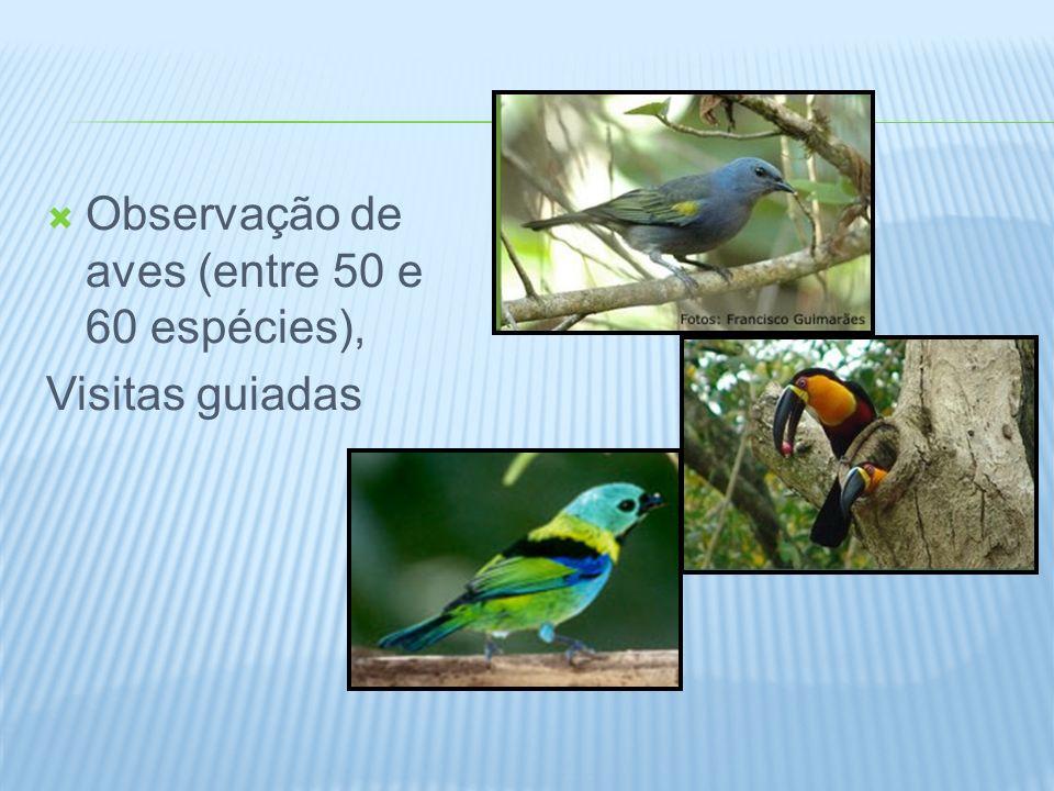 Observação de aves (entre 50 e 60 espécies),