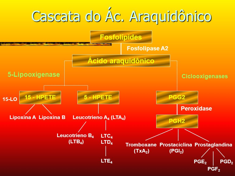 Cascata do Ác. Araquidônico