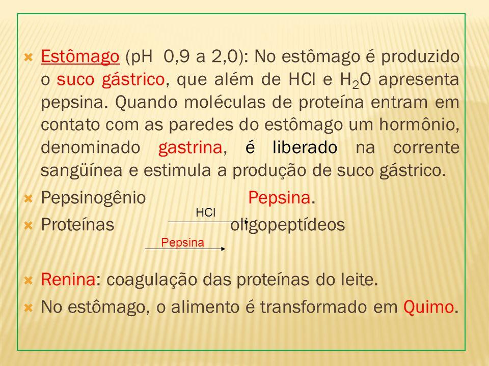 Proteínas oligopeptídeos Renina: coagulação das proteínas do leite.