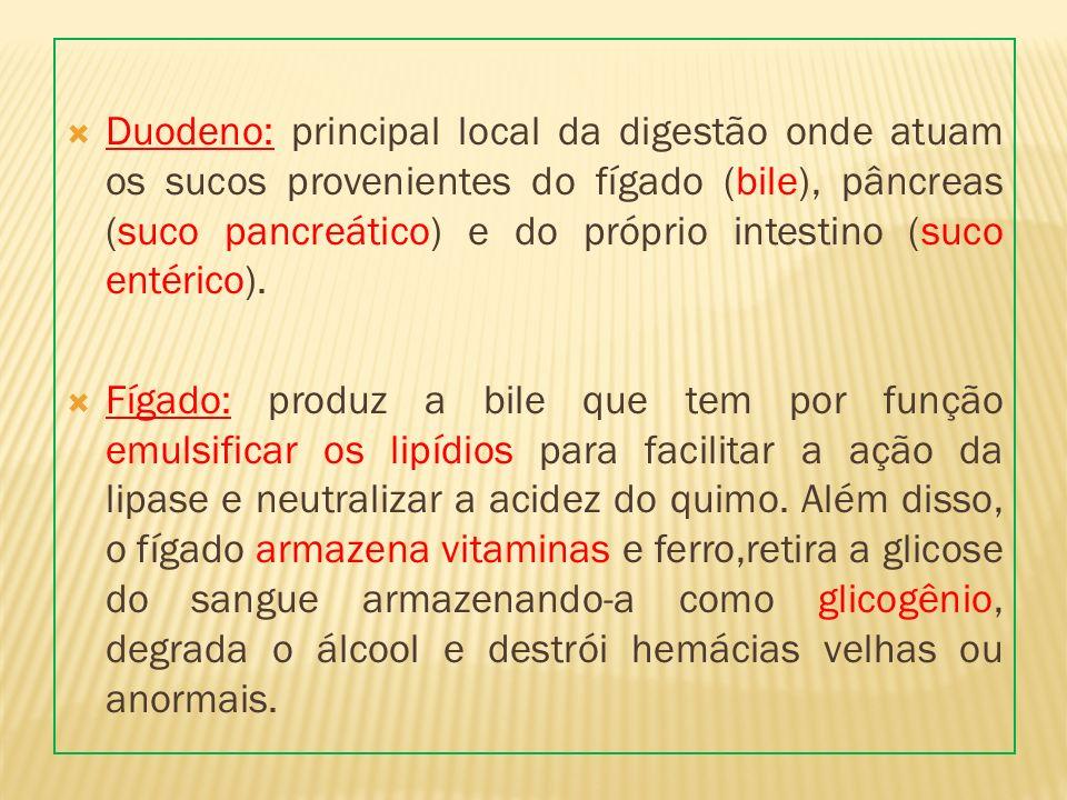 Duodeno: principal local da digestão onde atuam os sucos provenientes do fígado (bile), pâncreas (suco pancreático) e do próprio intestino (suco entérico).