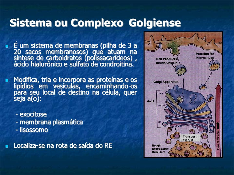 Sistema ou Complexo Golgiense