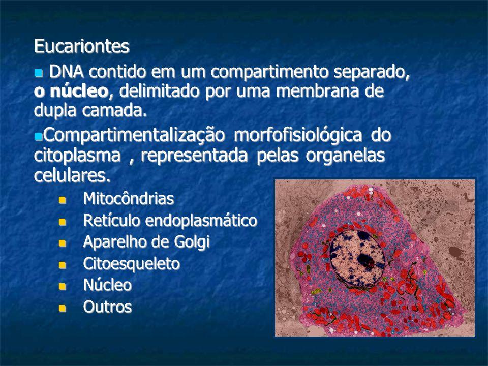 Eucariontes DNA contido em um compartimento separado, o núcleo, delimitado por uma membrana de dupla camada.