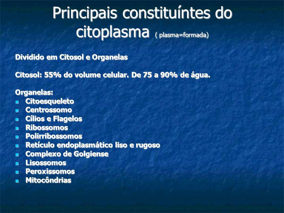 Principais constituíntes do citoplasma ( plasma=formada)