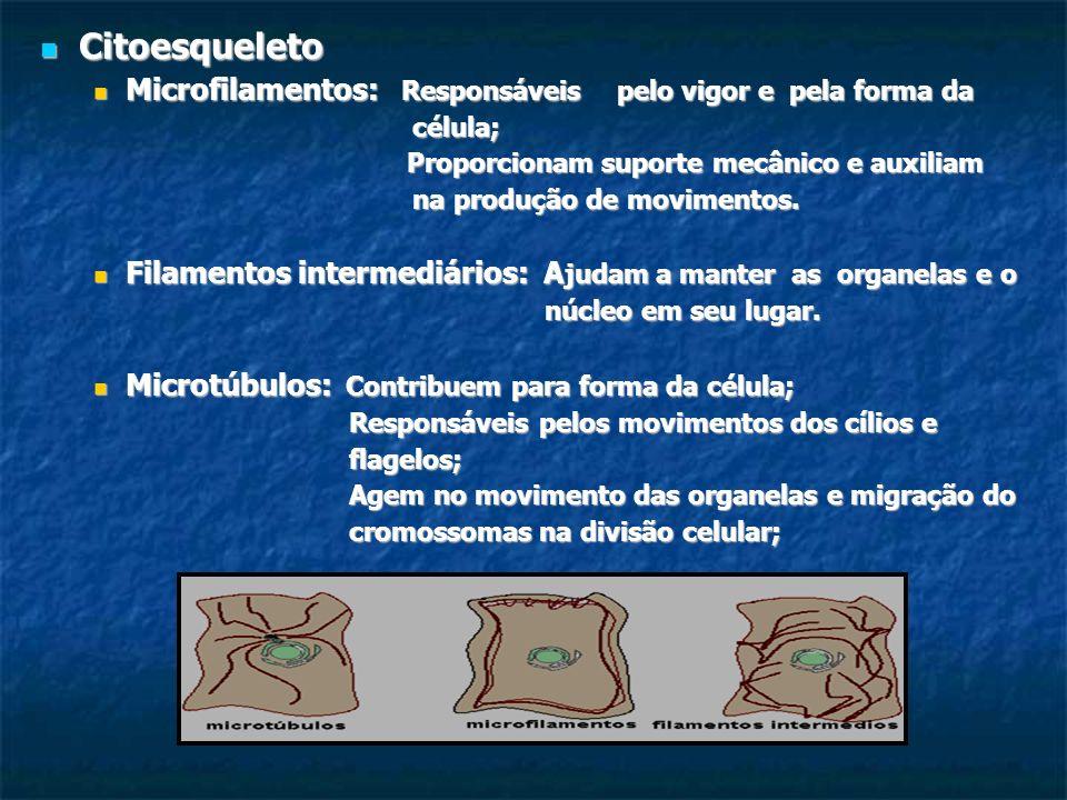 Citoesqueleto Microfilamentos: Responsáveis pelo vigor e pela forma da