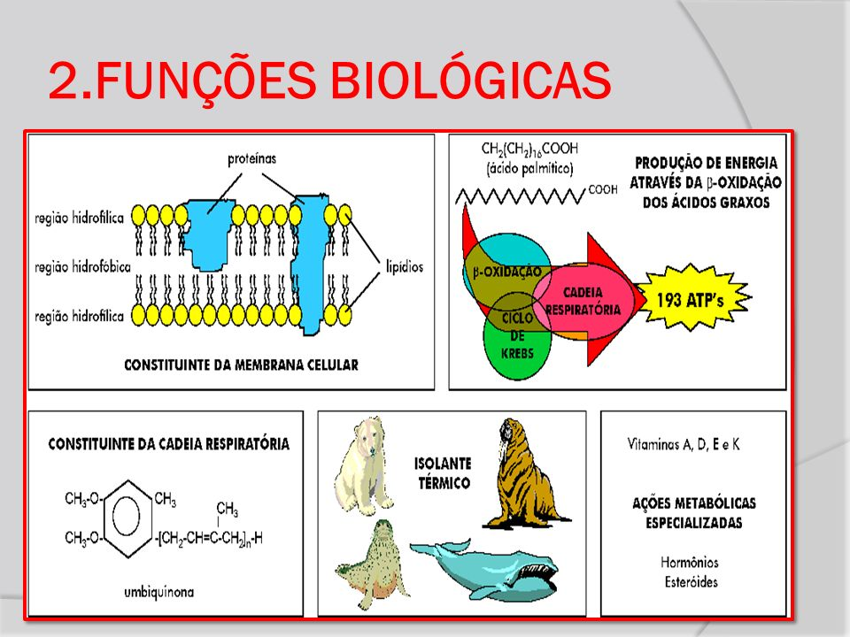 2.FUNÇÕES BIOLÓGICAS