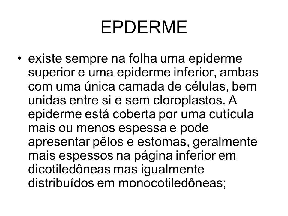 EPDERME