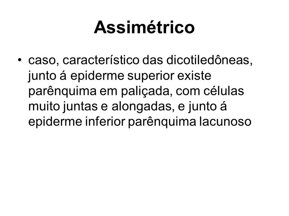 Assimétrico