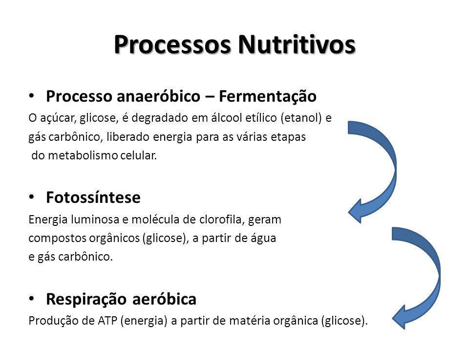 Processos Nutritivos Processo anaeróbico – Fermentação Fotossíntese
