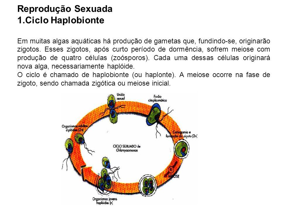 Reprodução Sexuada Ciclo Haplobionte