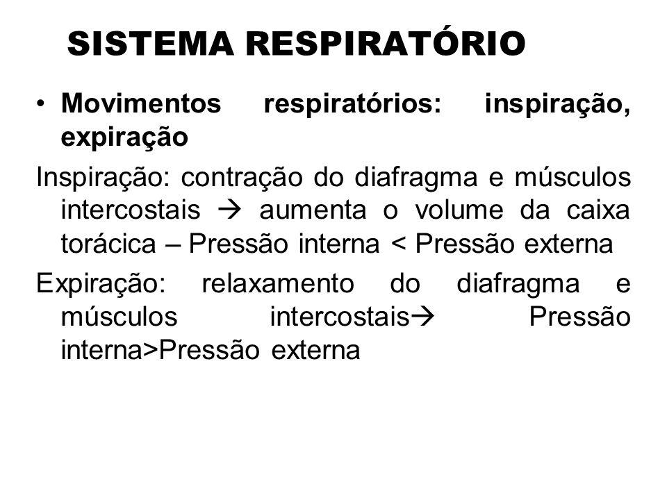 SISTEMA RESPIRATÓRIO Movimentos respiratórios: inspiração, expiração