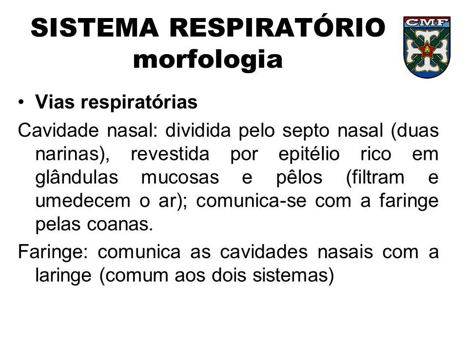 SISTEMA RESPIRATÓRIO morfologia