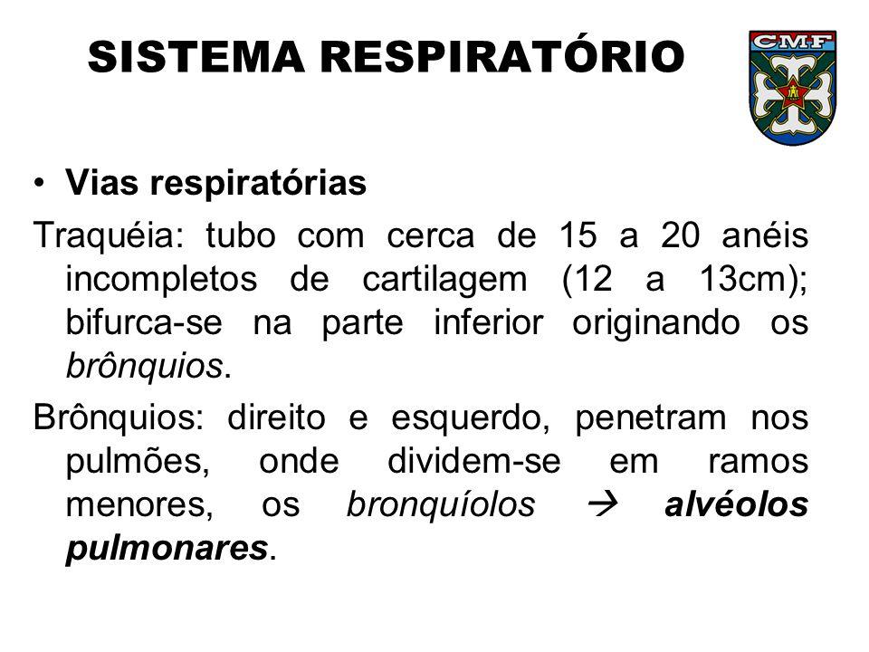 SISTEMA RESPIRATÓRIO Vias respiratórias