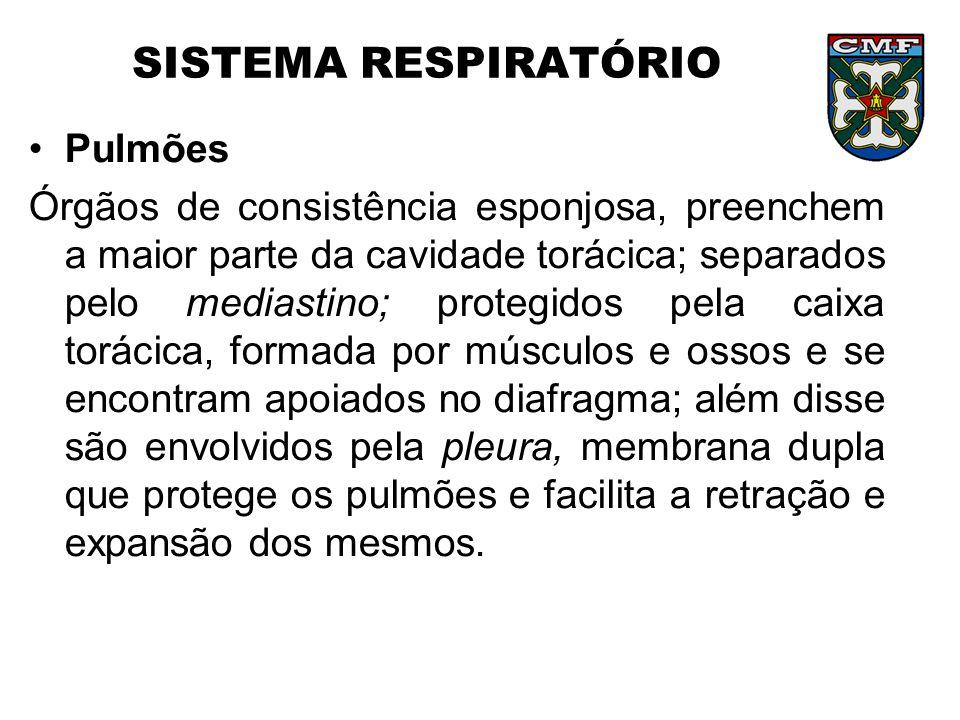 SISTEMA RESPIRATÓRIO Pulmões