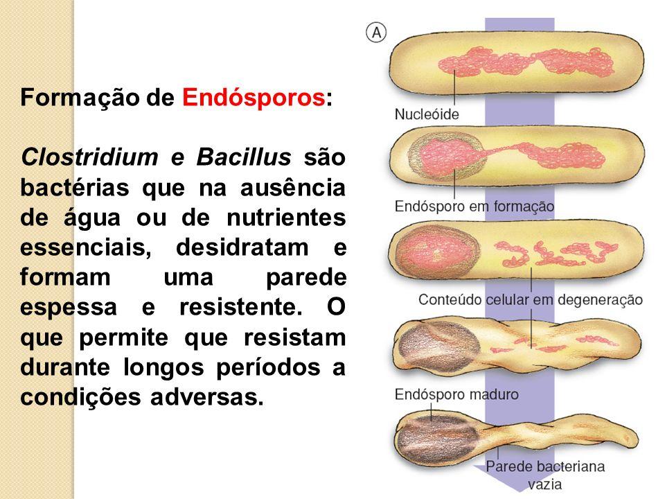 Formação de Endósporos: