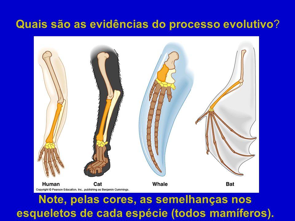 Quais são as evidências do processo evolutivo