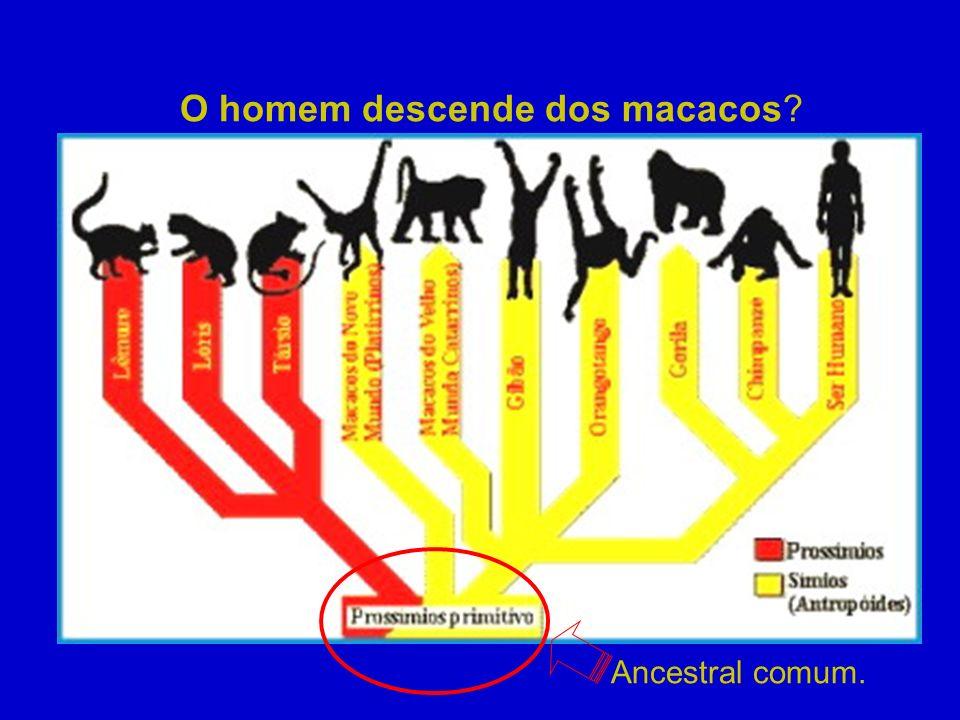 O homem descende dos macacos