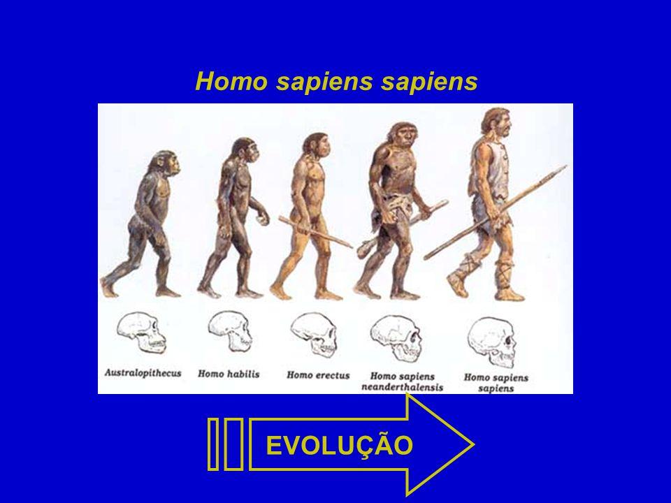 Homo sapiens sapiens EVOLUÇÃO EVOLUÇÃO